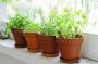 Plantas medicinales comestibles que no deben faltar en casa